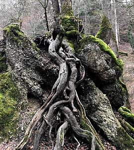 tree, root, nature, log, green, contour, rooted