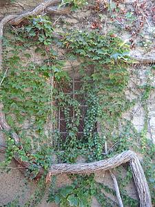 vin, hante, contes de fées, conte de fées, mystique, fenêtre de, envahi par la végétation