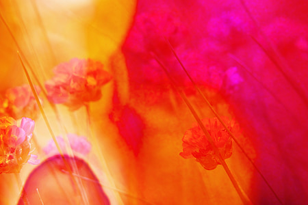 background, desktop, background image, abstract, screen background, flowers, bright