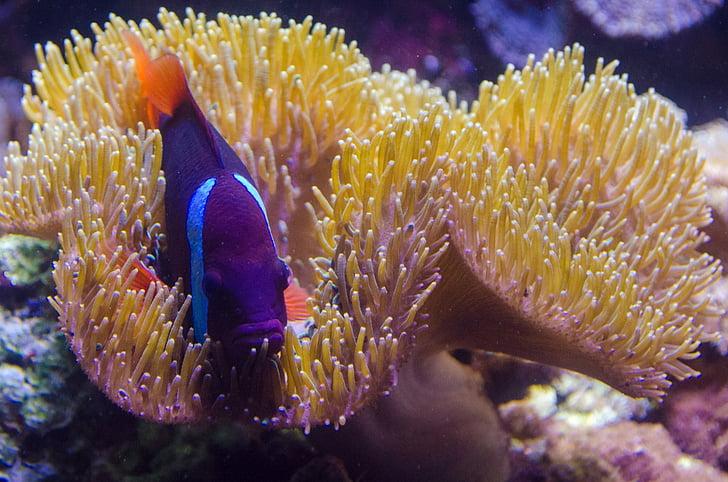 plante, sous l'eau, mer, océan, corail, naturel, nature