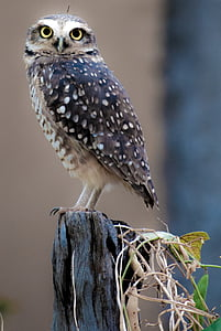 owl, bird, pity, birds