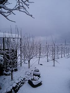 winter background, winter, winter apple tree, snow, nature, tree, cold - Temperature