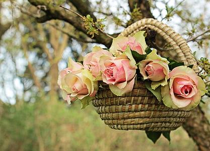 Roses, nobles roses, cistella, arbre, branca, flors, Rosa