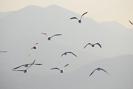 นกนางนวล, นก, เที่ยวบิน, นก, นกนางนวล, สัตว์, ธรรมชาติ