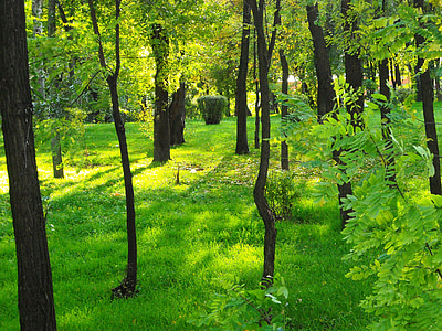 Príroda, Zelená, Forest
