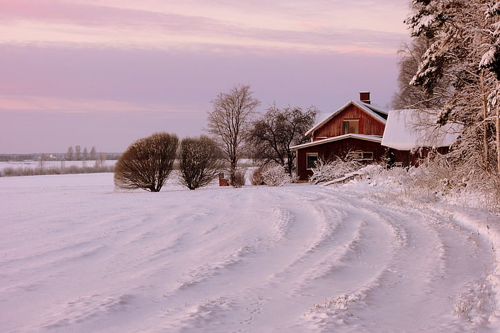 house, winter, snow, cold - Temperature, nature, tree, frost