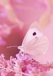 dier, vlinder, wit, Pieris brassicae, zomer, Tuin, insect