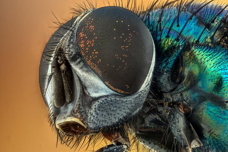 Makro, Insekt, Grün, Augen, Natur, fliegen, gelb