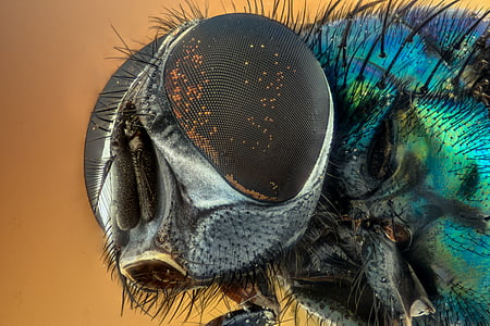 macro, insect, groen, ogen, natuur, vliegen, geel