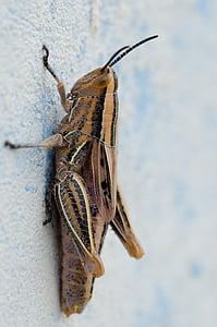 seina, eluslooduse fotograafia, putukate, Sulgege, Lõuna-Aafrika, Makro