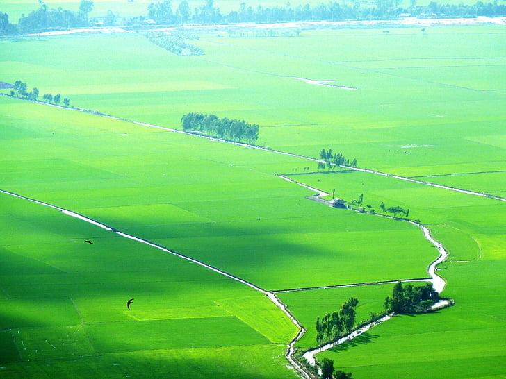 amb closca, verd, pintoresc, Vietnam, paisatge, natura, color verd