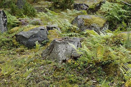 vegetation, sweden, flora, nature, fouling, landscape, archipelago