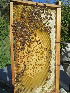 bees, beehive, honey, beekeeper, beekeeping, insect, hive