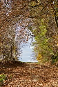 cảnh quan, rừng, con đường rừng, mùa thu, mùa thu lá, Thiên nhiên, cây