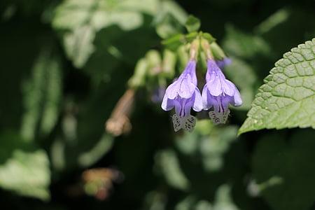 lilled, kevadel, Vaata, loodus, lill, taim, Suurendus: