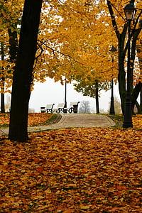 autumn in the park, autumn, autumn nature, bench in the park, autumn park, stroll, golden autumn