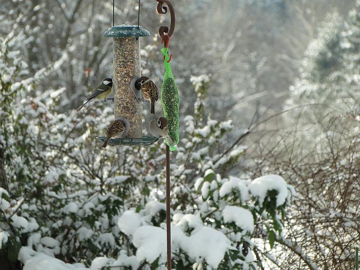 940+ Gambar Hewan Burung Pipit HD Terbaik