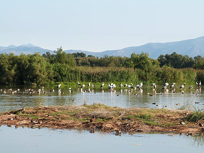 fugler, våtmarksområde, Empordà, Girona, Gerona, Stork, Aiguamolls