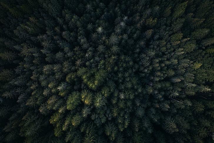grøn, blad, træer, planter, natur, udendørs, antenne
