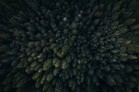 green, leaf, trees, plants, nature, outdoor, aerial