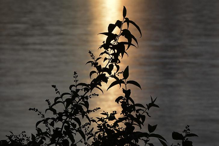 води, Буш, листя, abendstimmung, дзеркальне відображення, Атмосферні