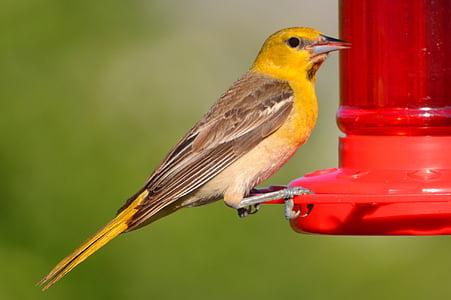 ocell, vida silvestre, natura