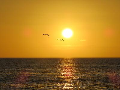サンセット, 太陽, における, 夕日, 残光, ロマンス, ゴールデン