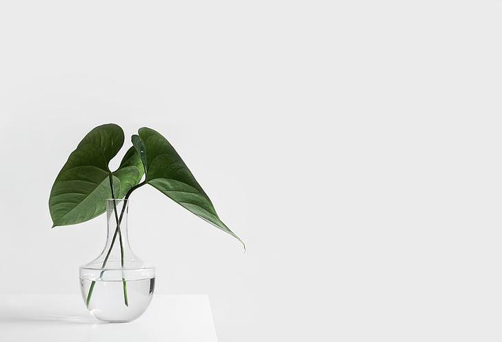 blanc, estètica, taula, Gerro, plantes, fulles, verd