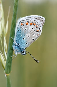 Natura, owad, Motyl, makro, Motyl - owad, wing zwierzęcego, zwierząt