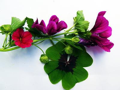 Four leaf apila, kukat, onnea, syksyn sisustus, Syksy, sisustus