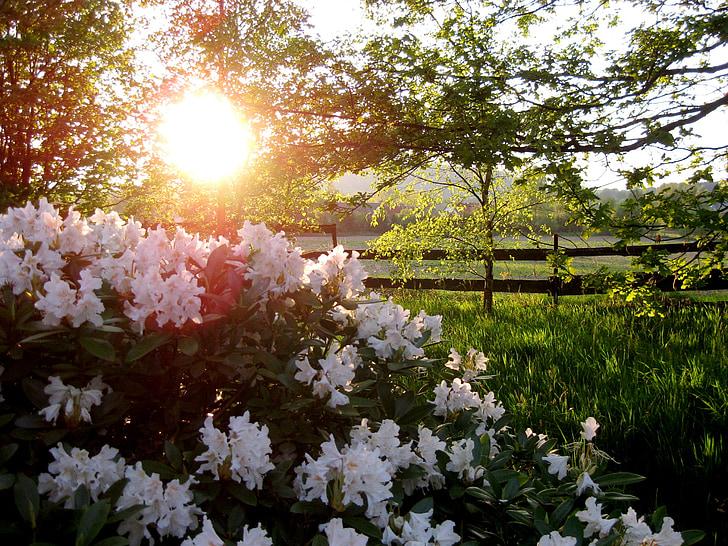 lilled, Aed, loodus, päike, lilleaed