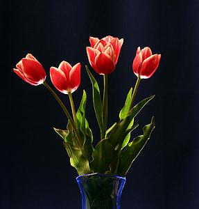 vermell, tulipes, bodegons, floral, Gerro, dia de la dona, flor
