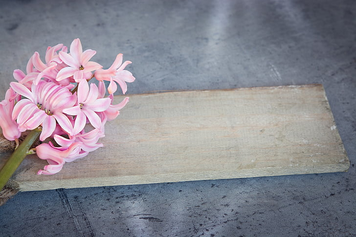 Jacint, flor, Rosa, flor rosa, flors de primavera, Rosa jacints, flors