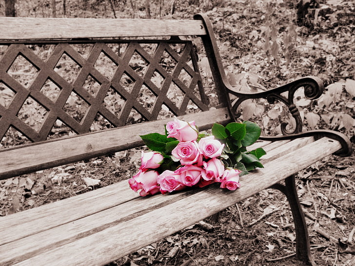 roses on bench, selective coloring, selective color, bench, flowers, roses, wooden