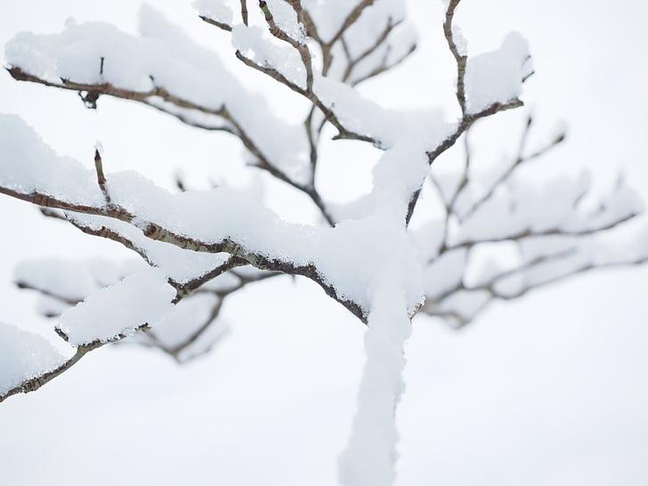 estetske, pozimi, sneg, dreves, snežilo, zimski gozd, zimski