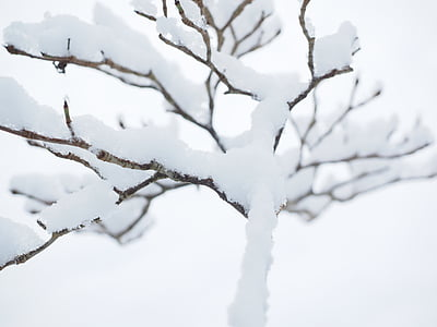estetické, Zimní, sníh, stromy, sněžilo, zimní les, Zimní