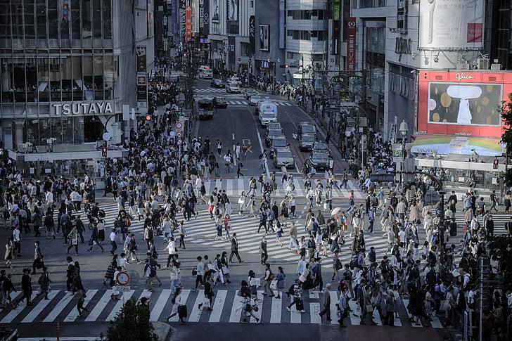 Shibuya, intersecció, horitzó, a l'exterior, edifici, Tòquio, cruïlla de Shibuya