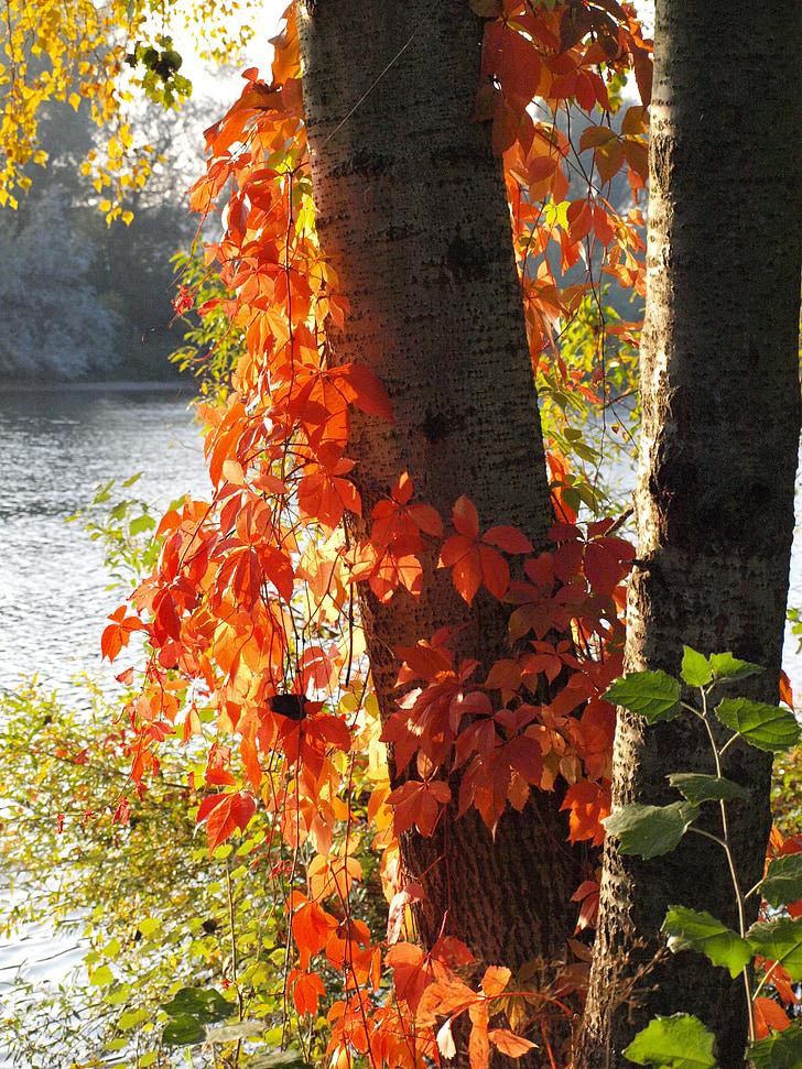 veini partner, punased lehed, Sügis, langevad lehed, värvilised lehed, Vaade Toompeale