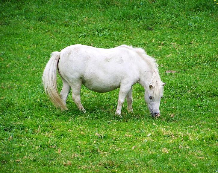 770 Gambar Hewan Kuda Putih HD Terbaik