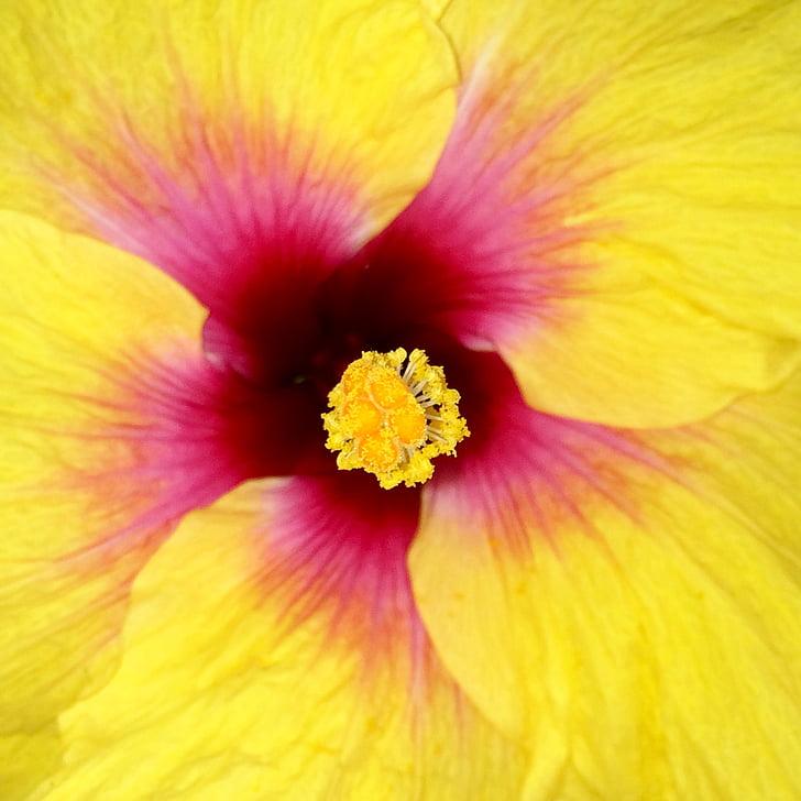 макрос, тропічний квітковий, квітка Закри, Тулум, Мексика, жовтий, рожевий