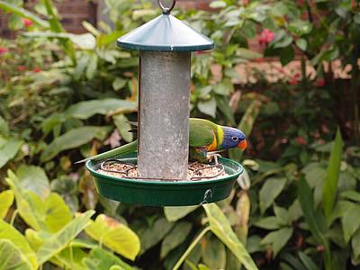Lloro, ocell, l'alimentació, animal, vida silvestre, zoològic, natura