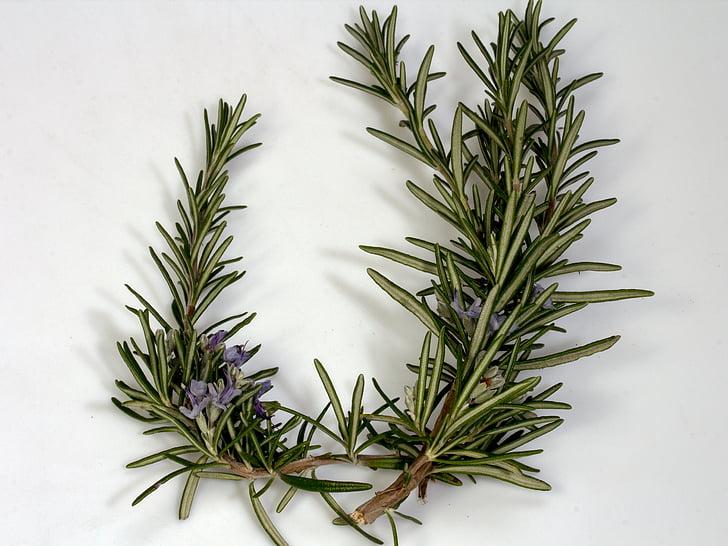 chi nhánh, hương thảo, Blossom, nở hoa, gia vị, màu xanh, loại thảo dược nhà bếp