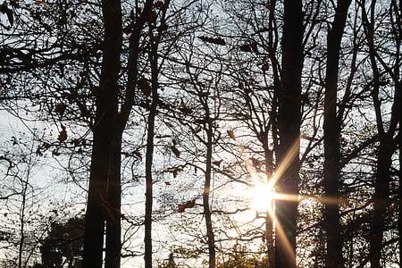 bosc tardor, sol, torna la llum, Kahl, bosc, tardor, fulles