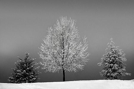 puut, talvi, kylmä, lumi, Talvinen, luminen, maisema