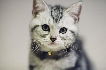 cat, pet, cuteness, cat mia