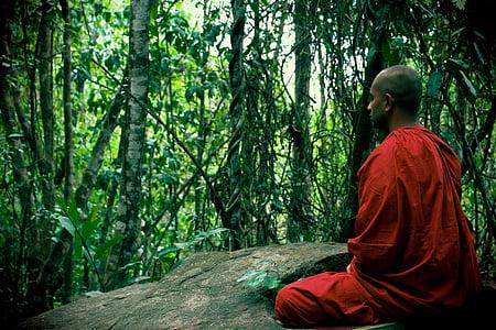 Meditatsioon, bhikkhu, mahamevnawa, Sri lanka, Buda, munk, metsa