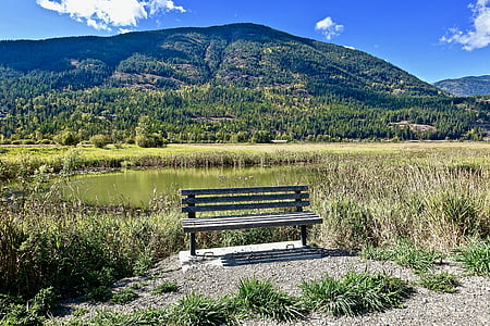 seient, Banc, fusta, tranquil, tranquil·la, assegut, d'estar