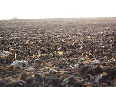 орни, поле, обработваема земя, Селско стопанство, пейзаж, природата, орат