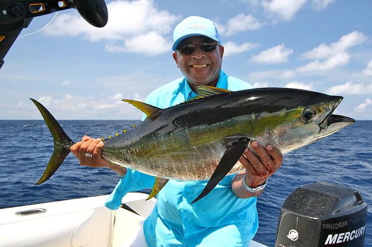 ตกปลา, โอเชี่ยน, ตกปลา, คอสตาริก้า, ครีบเหลือง, ปลาทูน่า