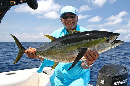pesca, oceà, pesca de l'oceà, Costa rica, flavipinnis, tonyina